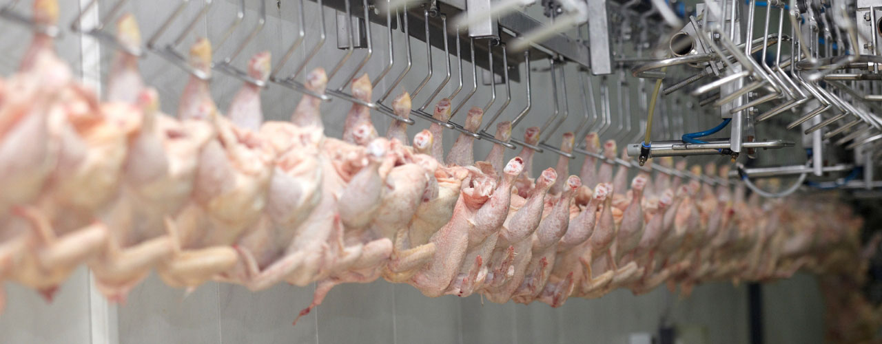 Poultry Processing Facilities